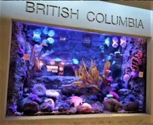 British Columbia fish tank
