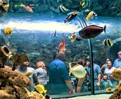 Walk through fish tank